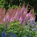 astilbe-chinensis-purpurkerze-09.jpg