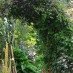 clematis-viticella-05.jpg