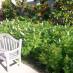 sorbaria-sorbifolia-10.jpg