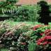 spiraea-japonica-little-princess-06.jpg