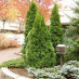 thuja-occidentalis-smaragd-01.jpg