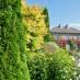thuja-occidentalis-smaragd-10.jpg