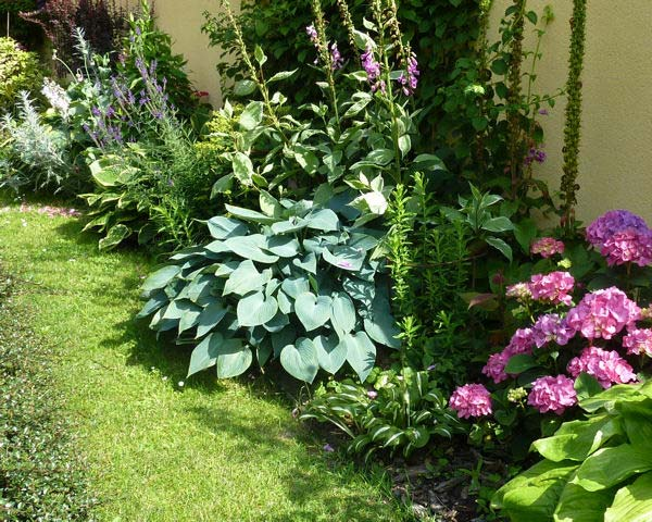 hosta-hybridum-blue-mammoth-08.jpg