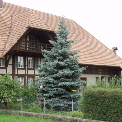 picea-pungens-koster-08.jpg