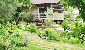 Сосны. Коттеджный сад.